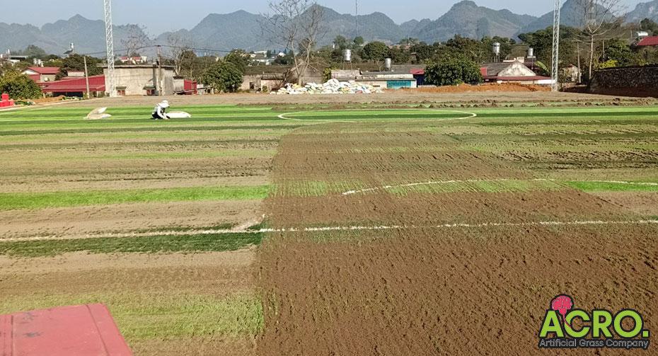 Xây dựng sân bóng đá cỏ nhân tạo